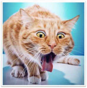 best cat food to prevent vomiting