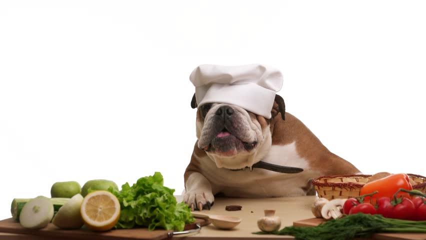 food for bulldog