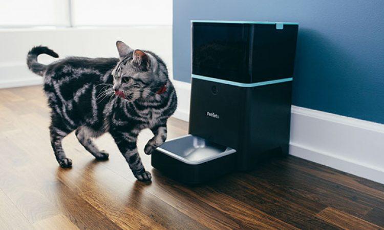 Smart Feeder Cat