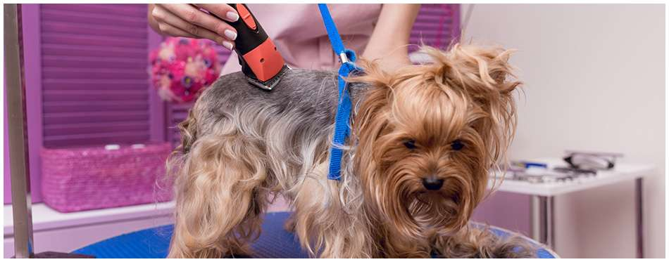 electric dog clippers