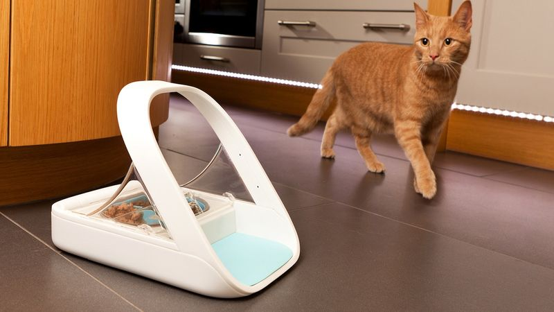 Electronic cat feeders