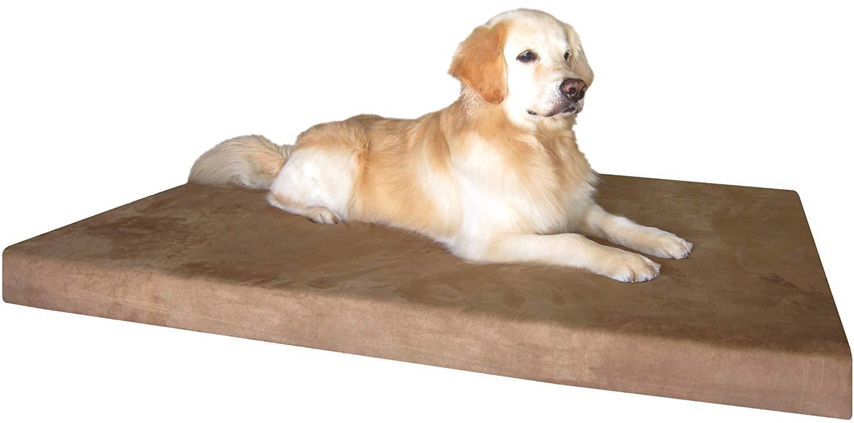 Best Orthopedic Dog Bed