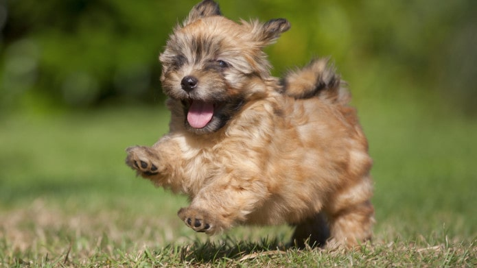 The Best Dog Food for Small Breed Puppies