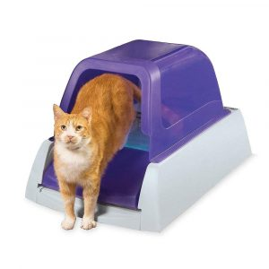 wifi pet feeder