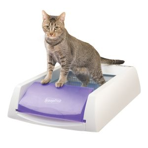 cat feeder for wet food