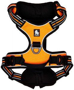 french bulldog harnesses