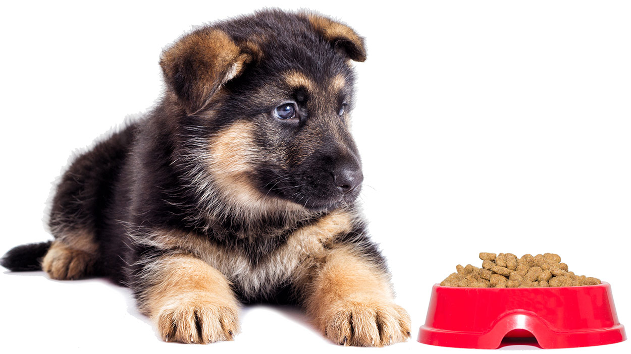 best dog food for a German shepherd puppy